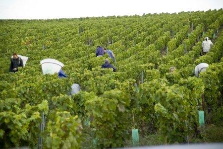formation professionnelle viticulture